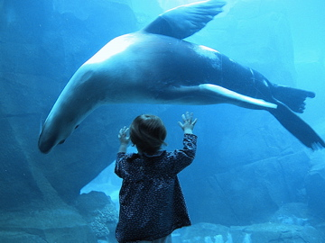 Young girl and sea lion communicate through dance.